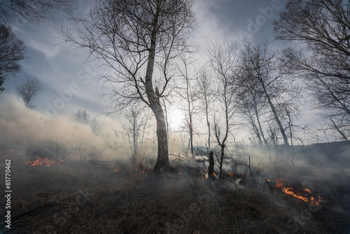 Fire in the mixed wood forest. - 81770462