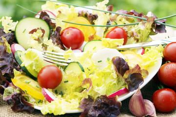 Salat - Frühling - Sommer