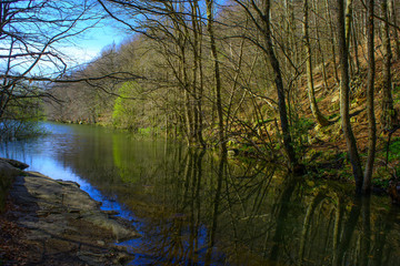 Forest and river. Montseny Natural Park. Spain
