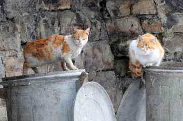 Two Stray Cats on Garbage Containers