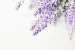 Leinwanddruck Bild - Lavender branch on a white background
