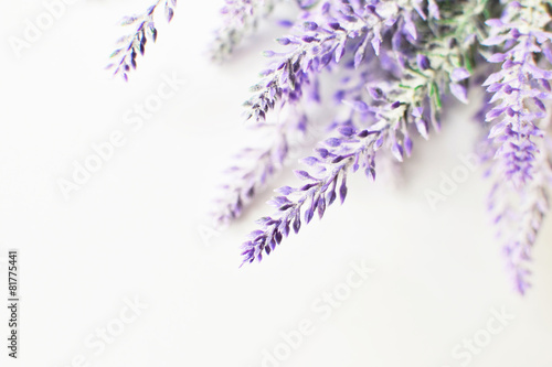 Deurstickers Lavendel Lavender branch on a white background