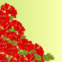 Flowering shrub red hibiscus vector
