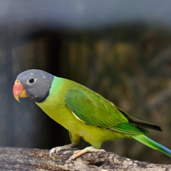 Green parrot holding on branch
