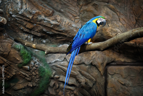 Foto op Plexiglas Papegaai macaw parrot blue sits on a rock at the zoo