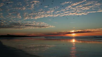 Birds greet Cherry Grove Beach sunrise