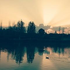 Lago con pato