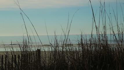 Winter beach view through dried sea grass