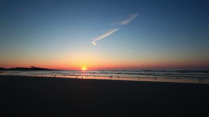 Birds on the beach at sunrise