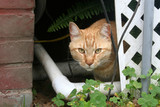 Feral Cat Under House poster