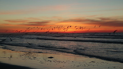 Dramatic beach at daybreak with flock of flying birds