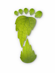 the carbon footprint