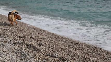 Funny dog barking at the waves