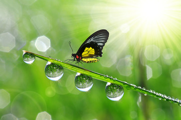 Fresh green grass with dew drops and butterfly.