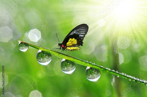 Leinwanddruck Bild Fresh green grass with dew drops and butterfly.