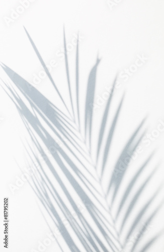 Plexiglas Palm boom shadow of palm leaves