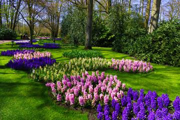 spring landscape.  spring flowers