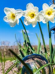 Glaskugel im Frühling