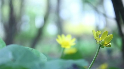 yellow flower of spring background