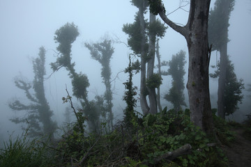 Tropical forest, Mount Merapi, Central Java, Indonesia.