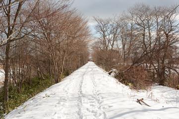 雪が積もる小道