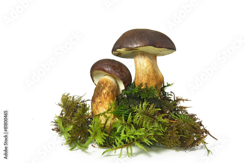 Leinwanddruck Bild Mushroom Bay Bolete (Boletus radius) on white background