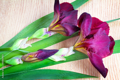 Keuken foto achterwand Iris Still life: flowering irises on the table surface.