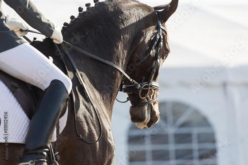Deurstickers Paarden Dressage Horses
