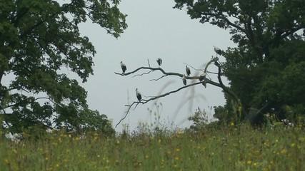 Storks sitting on a tree