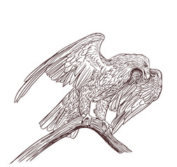eagle monochrome drawing on white