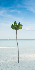 tree and beautiful seascape, Thailand