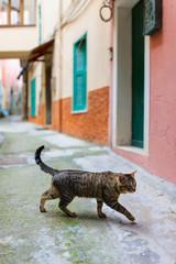Cat in Manarola village in Cinque Terre