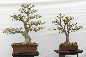 green collection of Bonsai