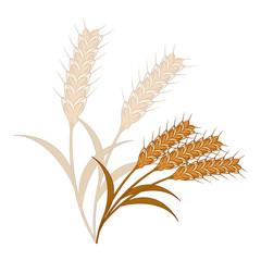 wheat 麦