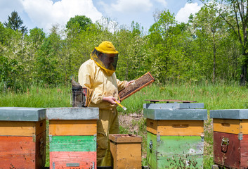 Beekeeper checking a beehive