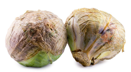 spoiled cabbage isolated on white background