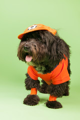 Dog as soccer supporter