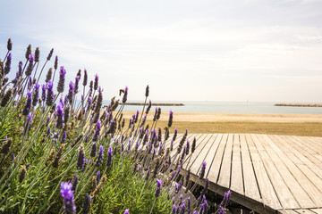 Lavender and Mediterranean sea
