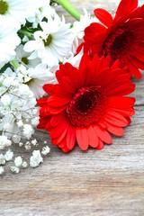 Blumengruß - rote Gerbera