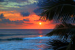 beautiful sea sunset and palm leaves - 81830425