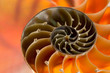 Close-up of nautilus shell. Patterns, textures, and details - 81830675