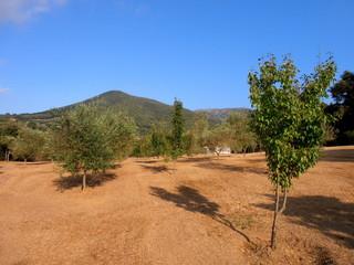 La via degli ulivi