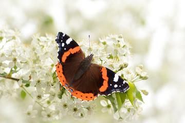 Schmetterling 124