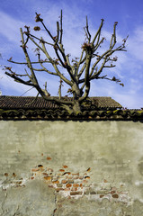 Ancient wall with tree branches. Color image
