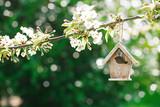 Little Birdhouse in Spring with blossom cherry flower sakura - 81836695