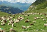 Troupeau de moutons