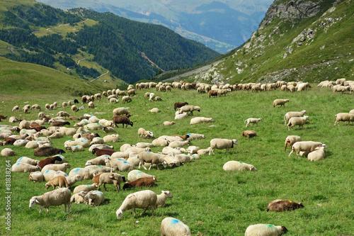 Poster Schapen Troupeau de moutons