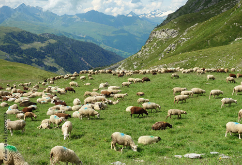 Canvas Schapen Troupeau de moutons