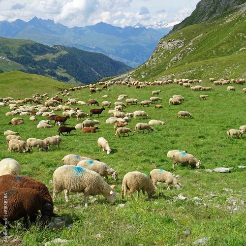 Aluminium Schapen Troupeau de moutons
