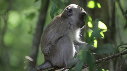Monkey hanging on the branch 2